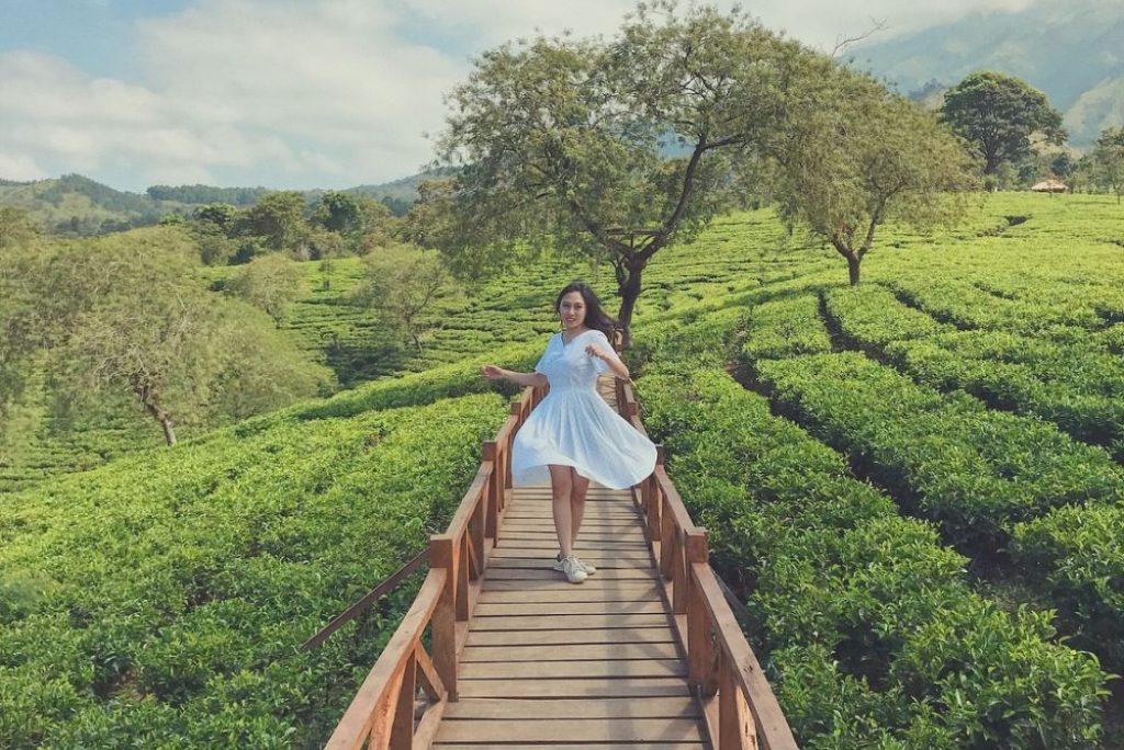 Rekomendasi Destinasi Agrowisata di Kota Malang, Dijamin Seru!